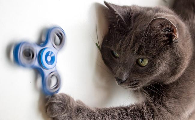 chat et jouet électrique